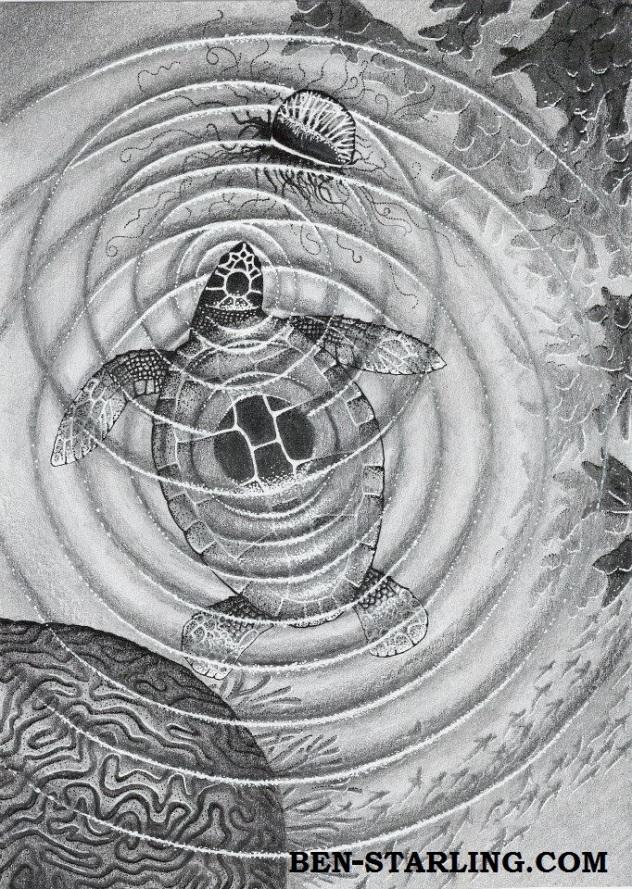 Ben Starling_Art_Turtle